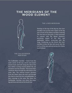 The Wood meridians Yin yoga guides