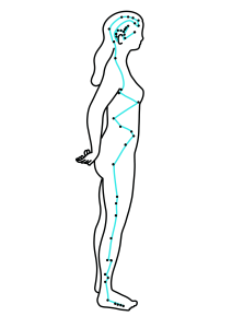The Gallbladder meridian